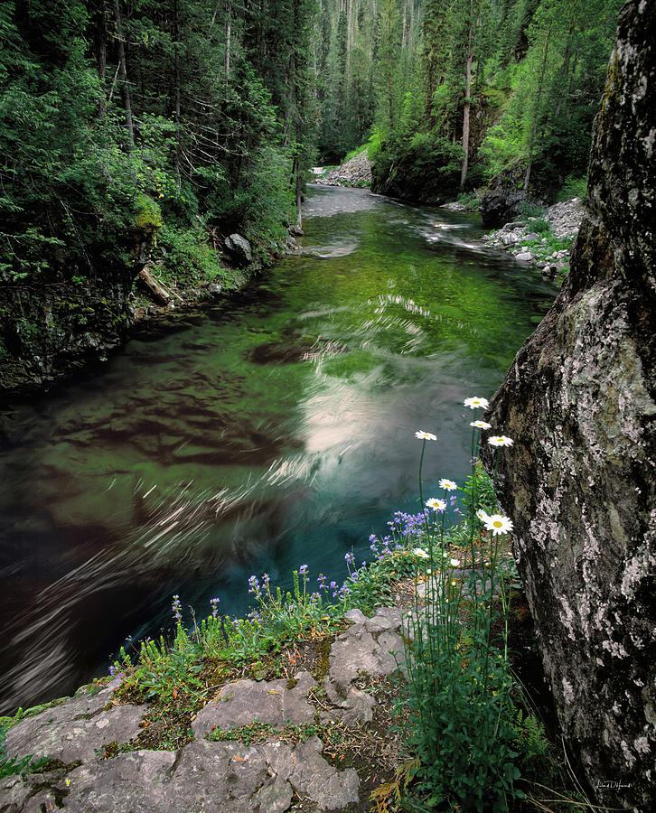 Idaho Photograph - St Joe River by Leland D Howard