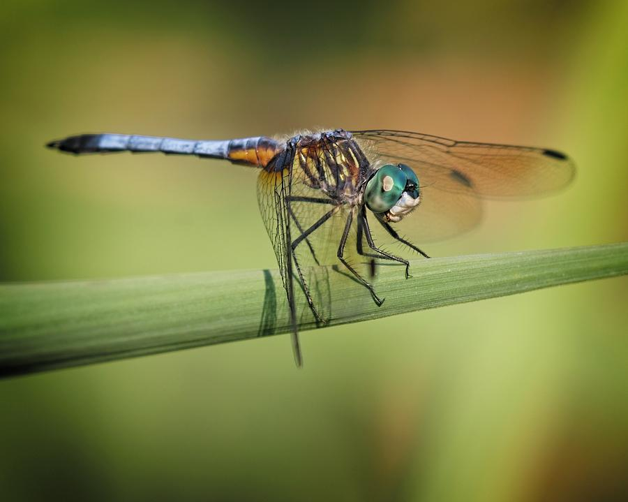 Insects Photograph - St Johns Marsh by John Bates