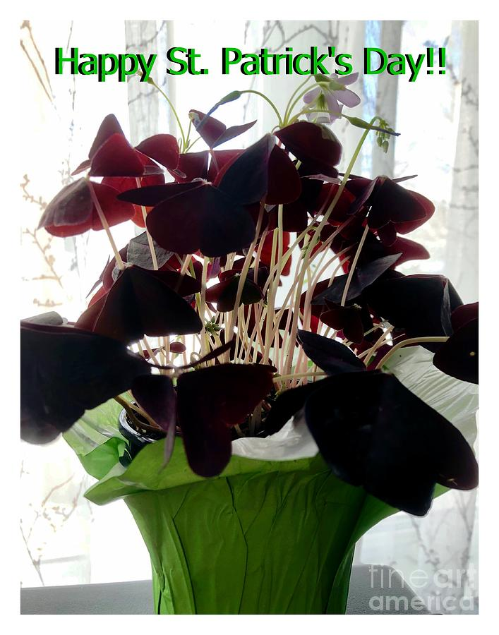 St. Patrick's Day Red Shamrocks by Barbara Griffin