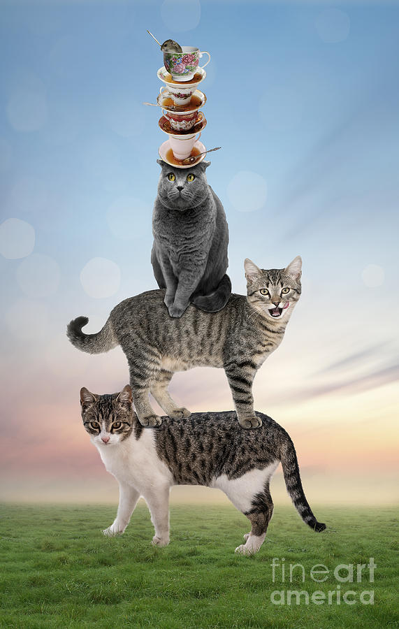 Stack Cats by Juli Scalzi