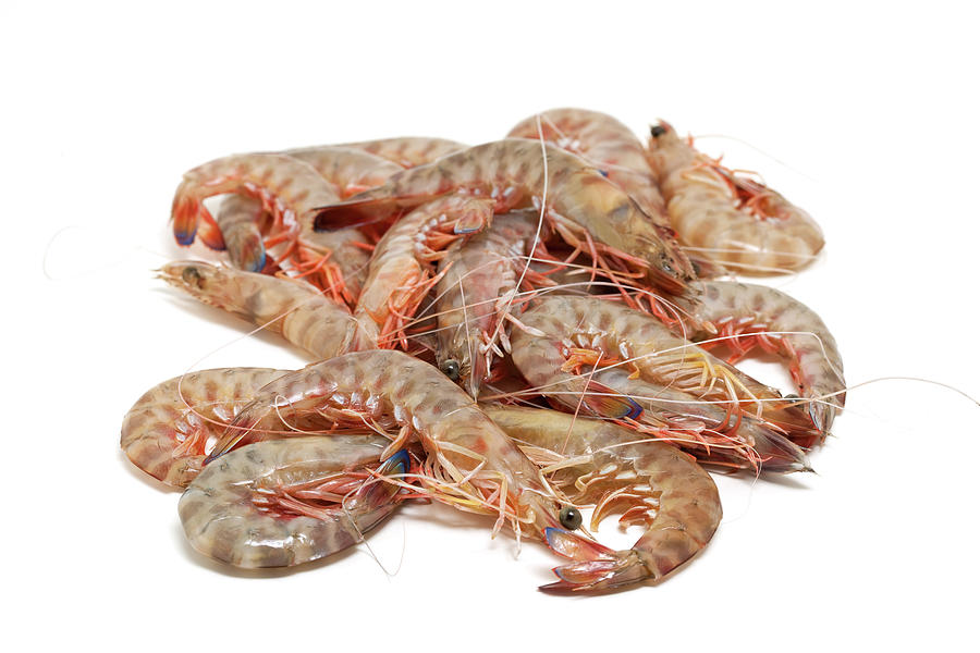 Stack Of Raw Fresh Shrimps Photograph by Ursula Alter