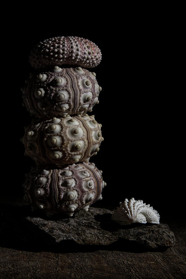 Stacked Urchins  by Richard Rizzo