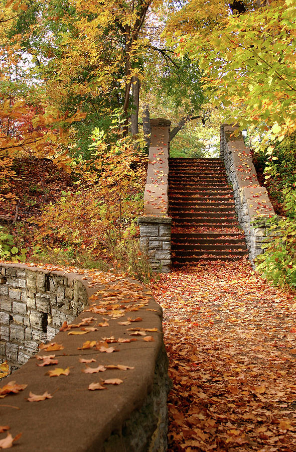 Stairway To The Forest Photograph by Wweagle
