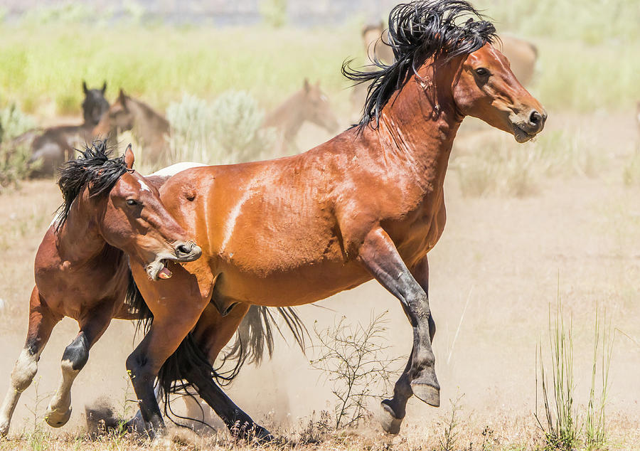 Stallion Action by Marc Crumpler