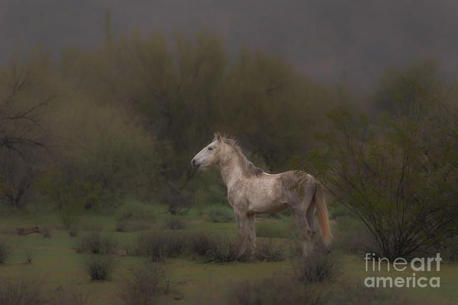 Stallion Watch by Lisa Manifold
