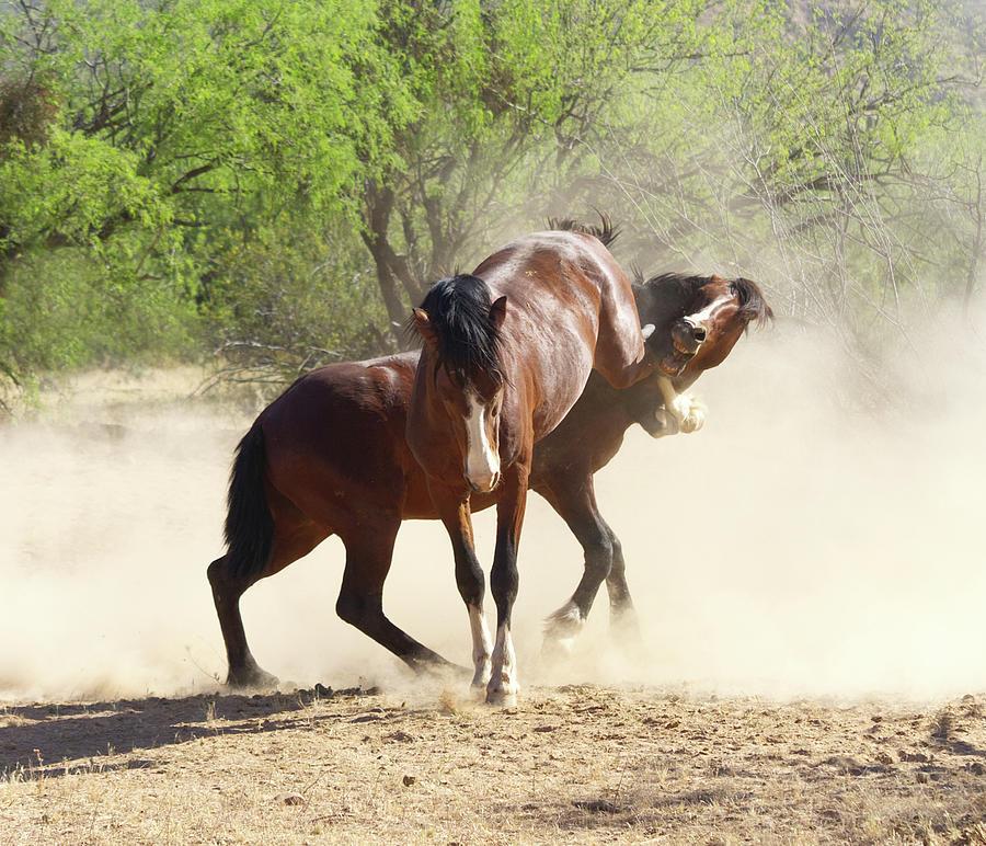 Stallions Battle by Barbara Sophia Travels