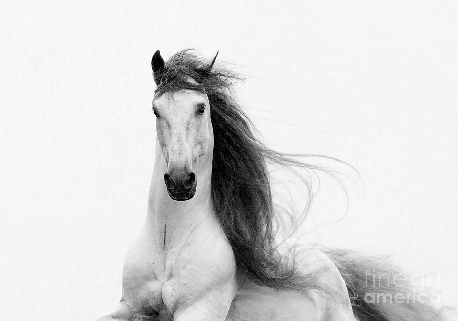 Horse Photograph - Stallions Glory by Carol Walker