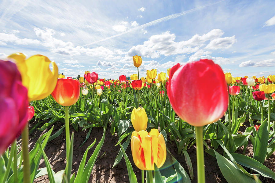 Stand among the Tulips by Johanna Froese