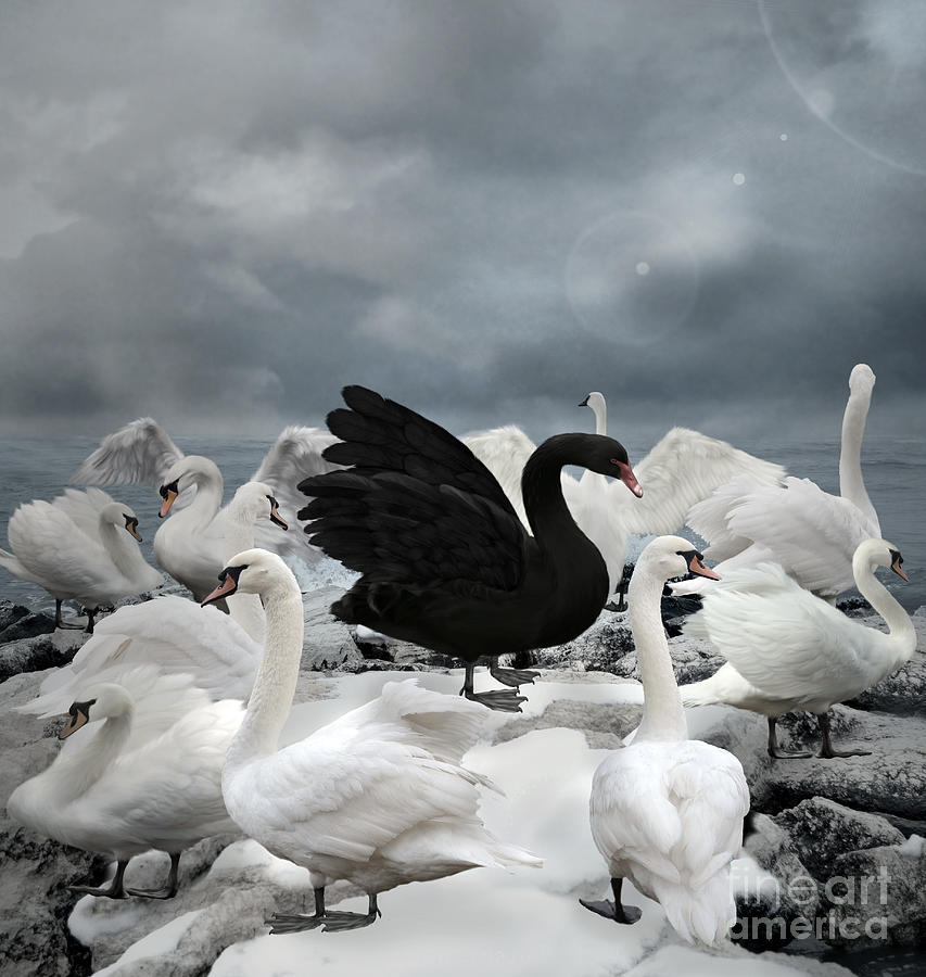 Symbol Digital Art - Stand Out Of The Crowd - The Black Swan by Ellerslie