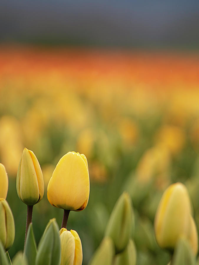 Standing Out in a Crowd by TL Wilson Photography  by Teresa Wilson