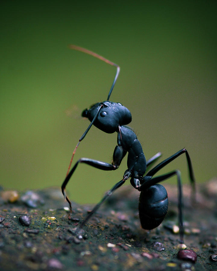 Standing Tall Photograph by Abhinav Sah