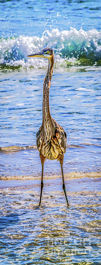 Standing Tall by Jim Collier