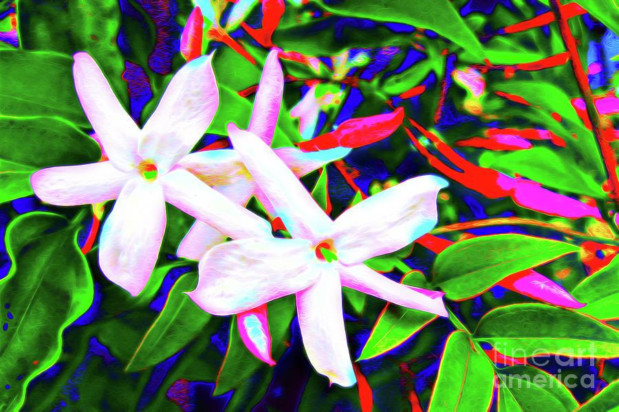 Star Jasmine Flowers by Jerome Stumphauzer
