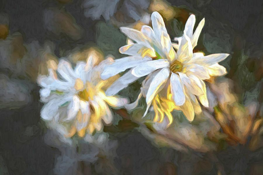 Flower Digital Art - Star Magnolia by Barry Wills