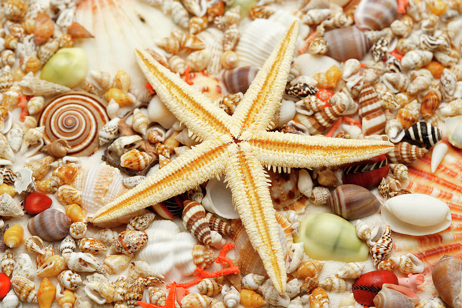 Starfish And Assorted Seashells Photograph by Imagemore Co.,ltd.