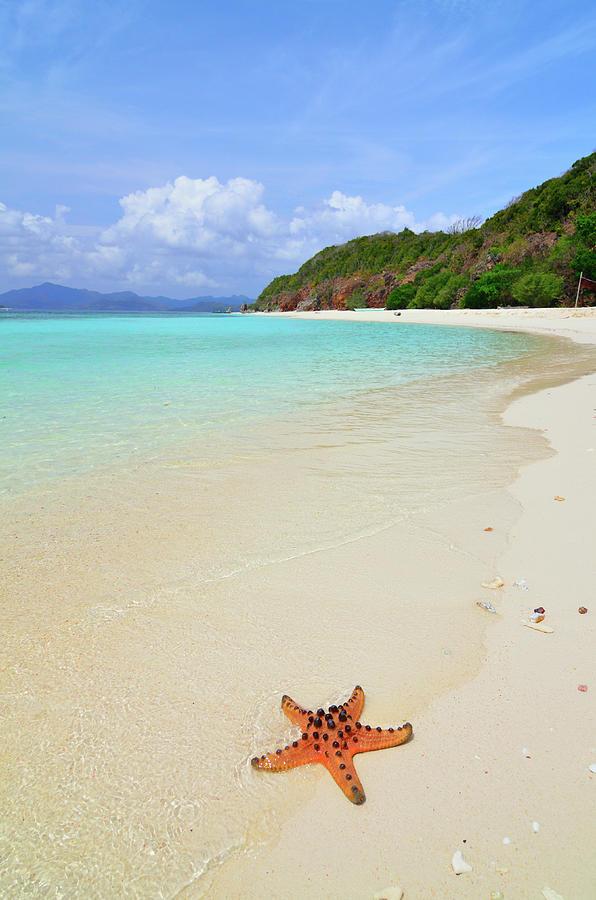 Starfish On Beach Sand Photograph by Joyoyo Chen