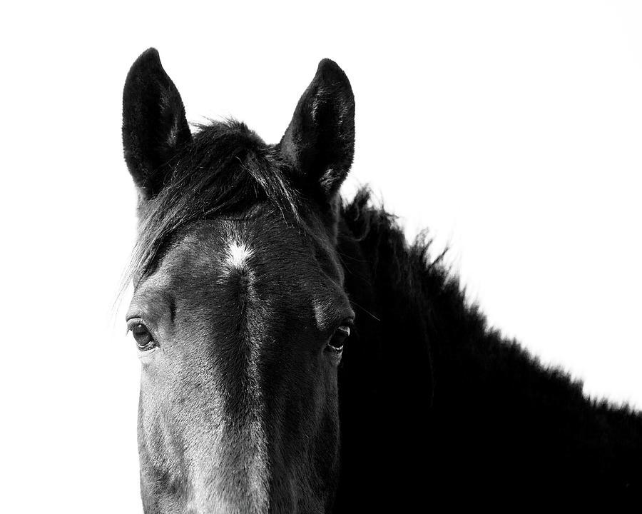 Starlight Black And White Photograph