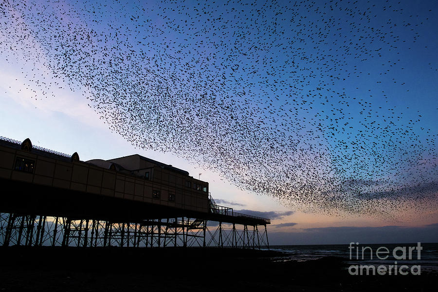 Europe Photograph - Starlings At Dusk Over Aberystwyth Pier by Keith Morris