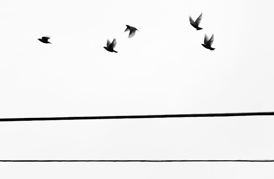 Starlings Flyby Photograph by Digi guru