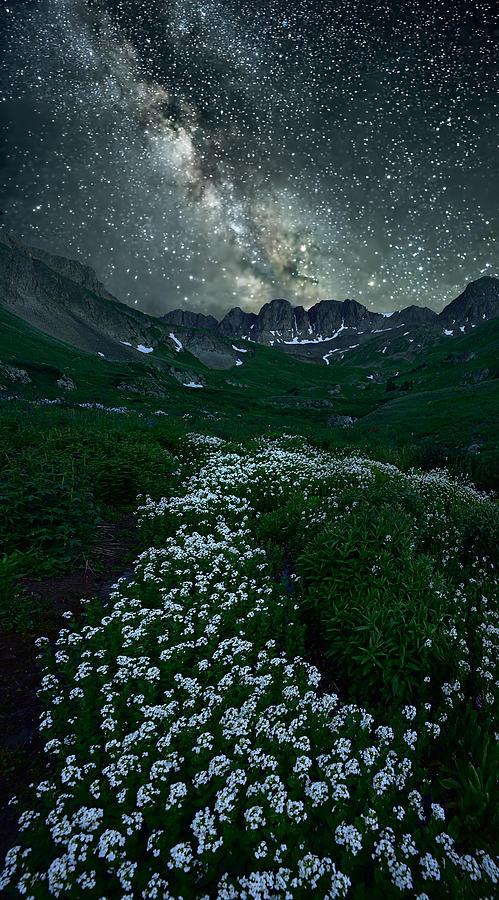 Starring Path Photograph by Mei Xu