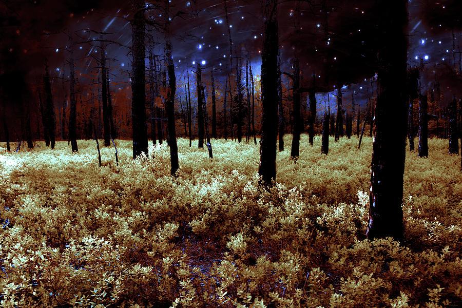 Starry Forest Night by Linda Sannuti