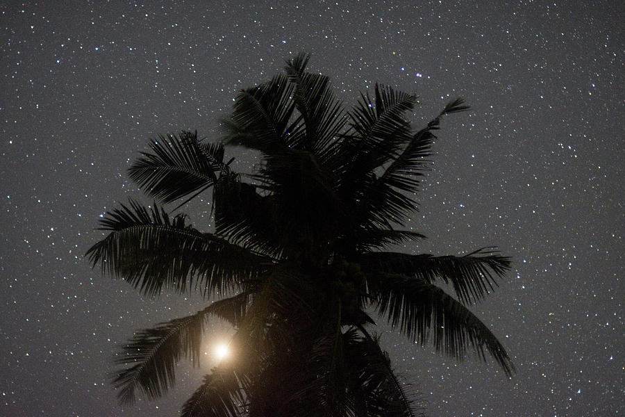 Palm Tree Photograph - Starry Night Palm Tree by Laura J P Richardson
