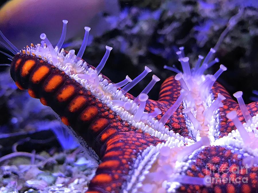 Starry Starfish Night by Karen Adams