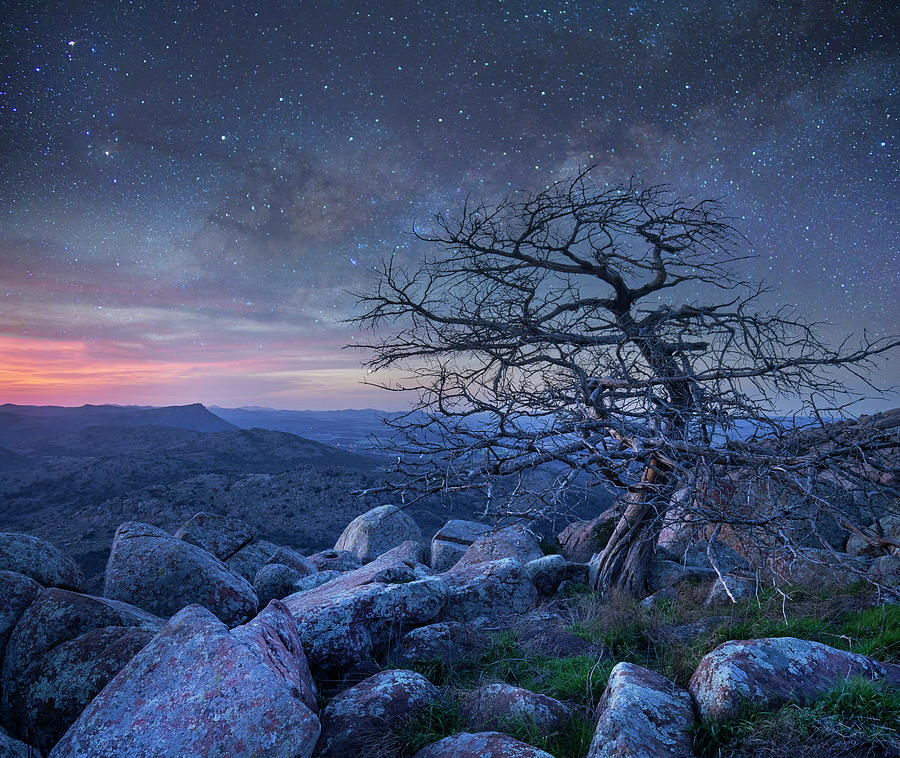 Mp Photograph - Stars Over Pine, Mount Scott by Tim Fitzharris