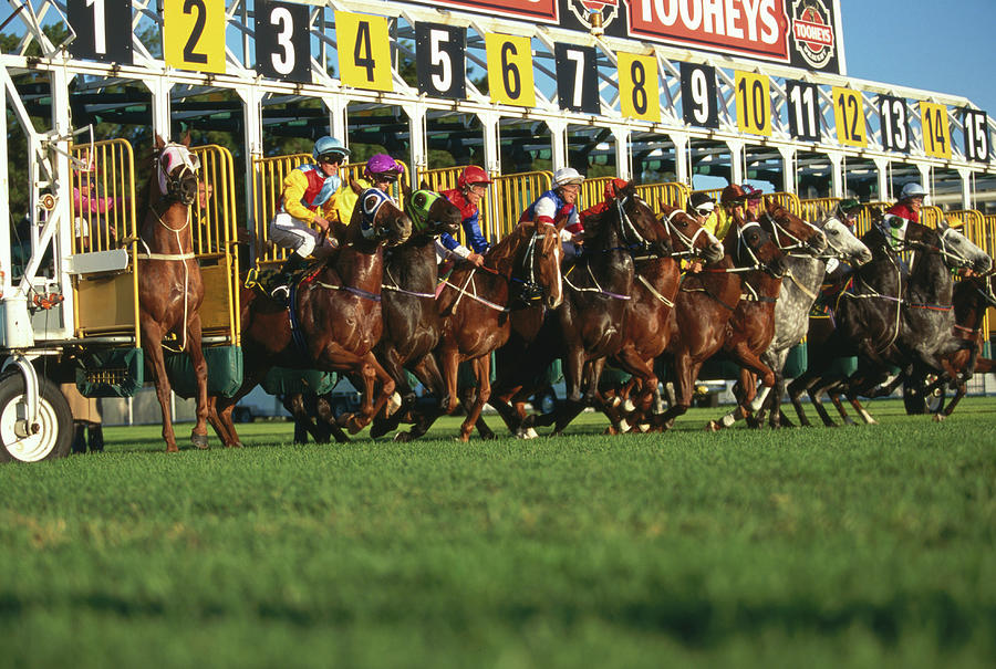 Start Of Horse Race, Sydney, New South Photograph by Oliver Strewe
