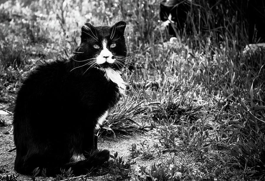 Stash Stalking the Amazing Mr. Tom Photograph by Sandra Dalton