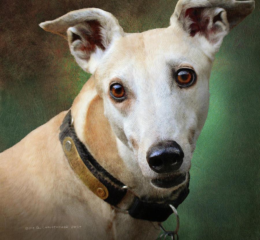 Statuesque Greyhound Portrait