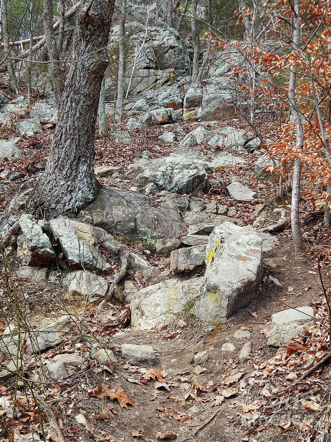 House Mountain Photograph - Steep Trails by Phil Perkins
