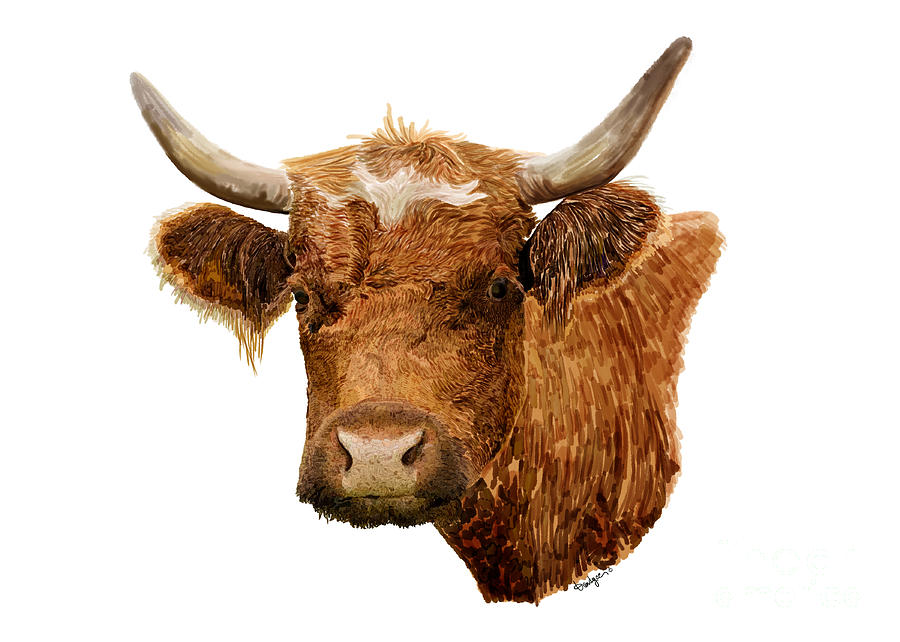 Steer Portrait - Barnyard Bunch Collection by Kandyce Waltensperger