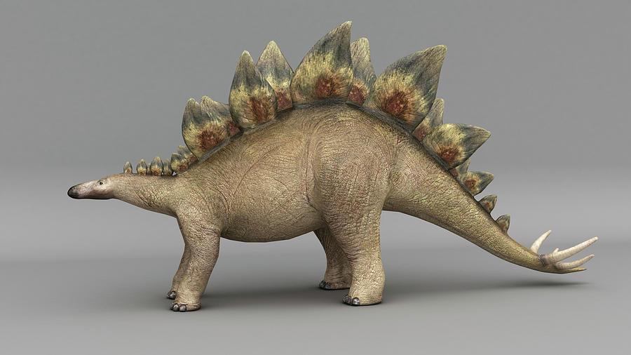 Stegosaurus Dinosaur, Colored by Stocktrek Images