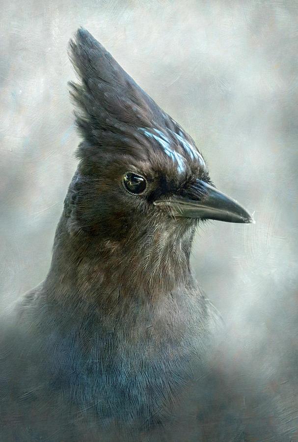 Steller Jay Portrait by Angie Vogel