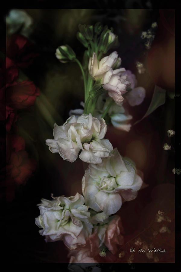 Stem of Flowers by Bonnie Willis