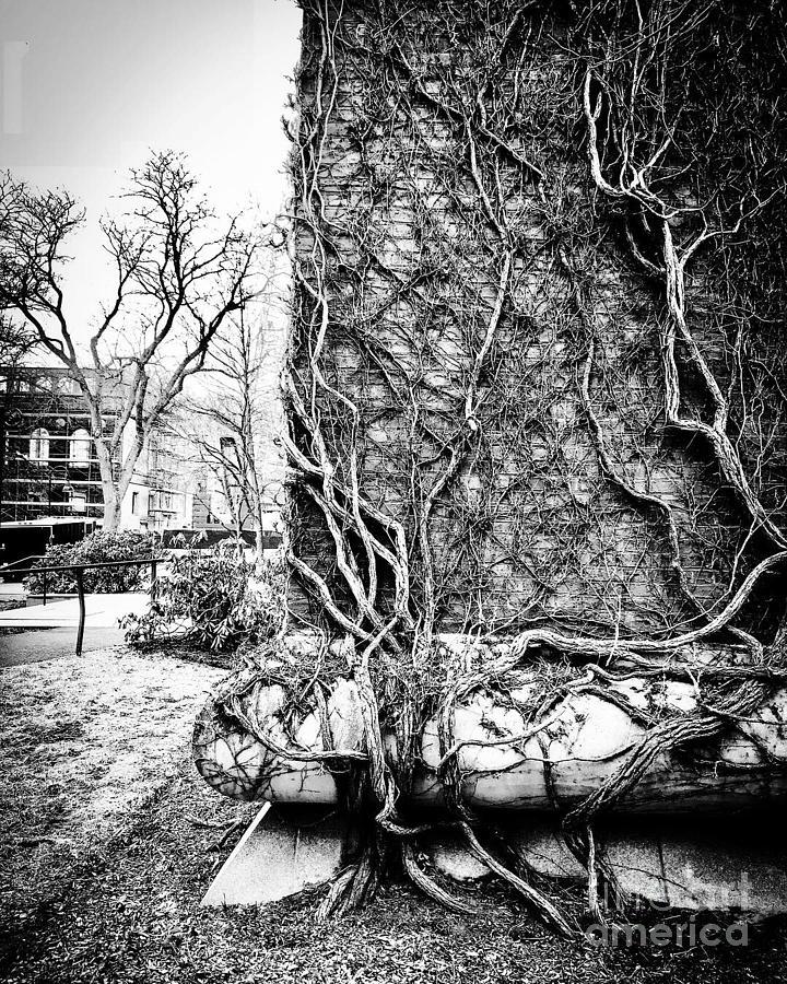 Stephen King Vines Photograph by JMerrickMedia