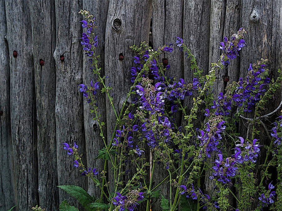 Stick Fence and Flowers by Western Light Graphics