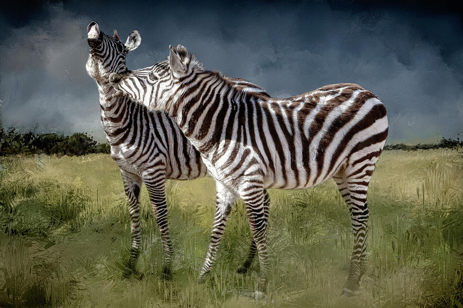 Zebra Photograph - Stiff Upper Lips by Donna Kennedy