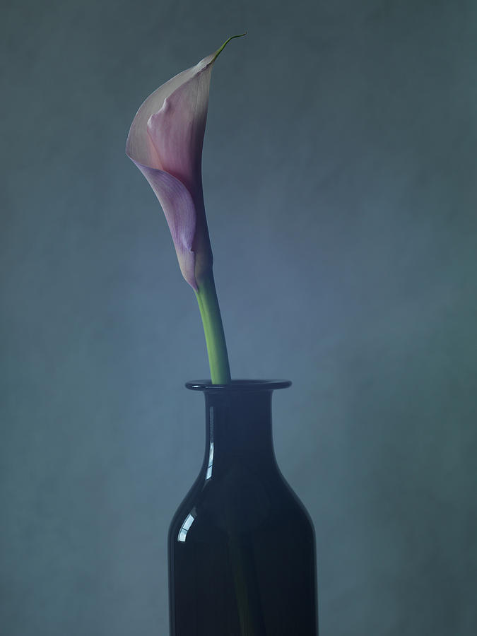 Still Life Of A Lily Flower In A Vase Photograph by Win-initiative
