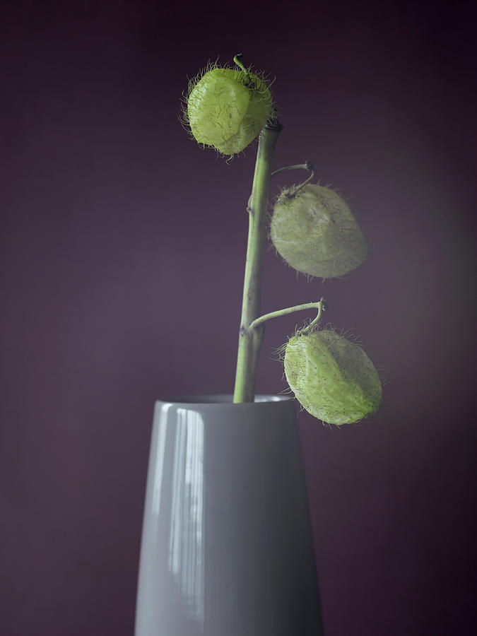 Still Life Of Seed Pods In A Vase Photograph by Win-initiative