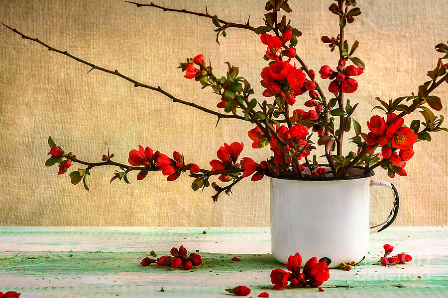 Love Photograph - Still Life With A Bouquet Of Barberry by Yotka