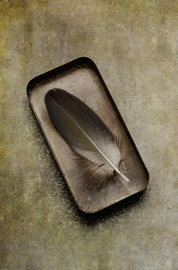 Still life with brown feather by Jaroslaw Blaminsky