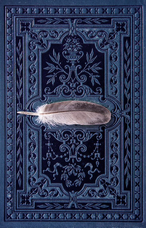 Feather Photograph - Still Life With Grey Feather by Jaroslaw Blaminsky