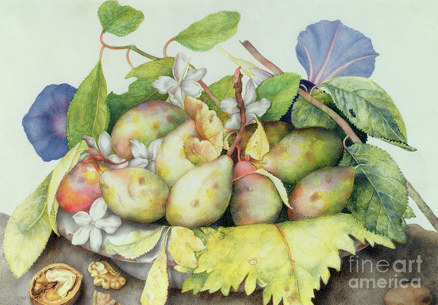 Still Painting - Still Life With Plums, Walnuts And Jasmine by Giovanna Garzoni