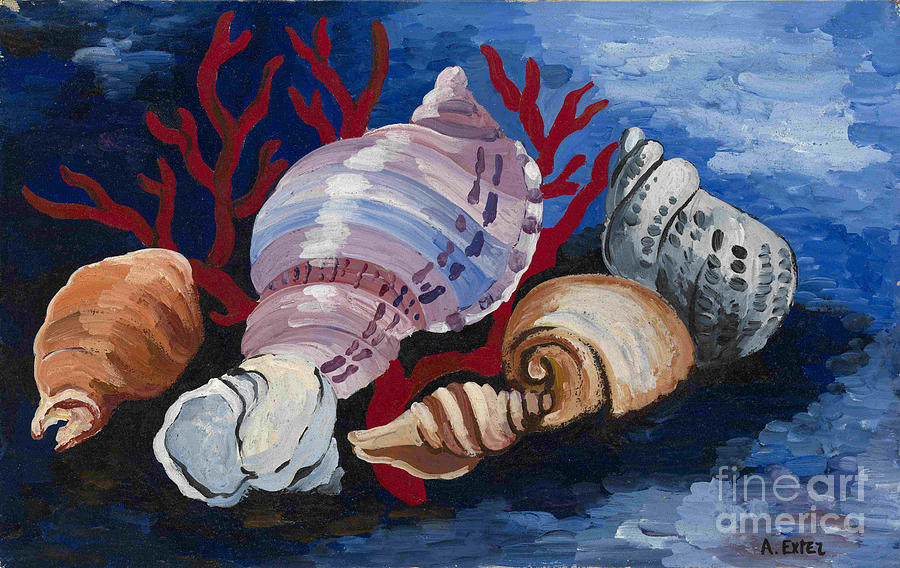 Still Life With Sea Shells Drawing by Heritage Images