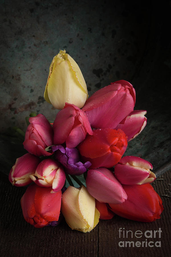 Blossoms Photograph - Still Life With Tulips 35 by Edward Fielding
