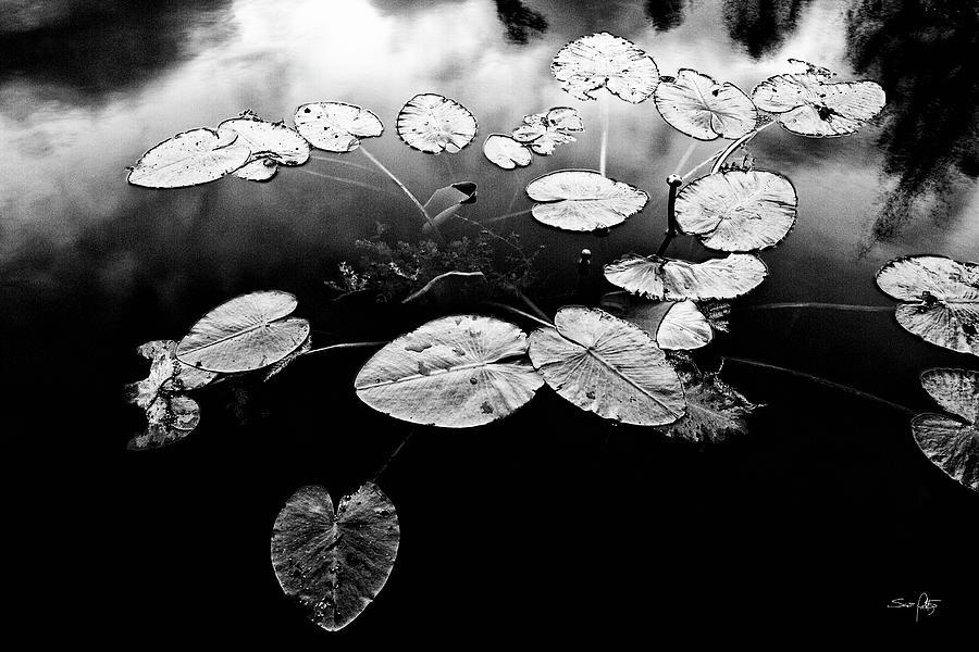 Black & White Photograph - Stillness by Scott Pellegrin
