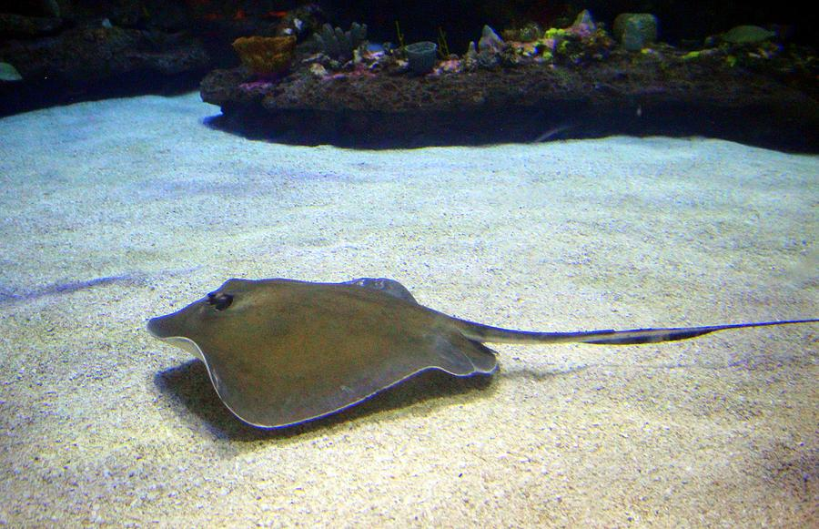 Stingray by Cynthia Guinn