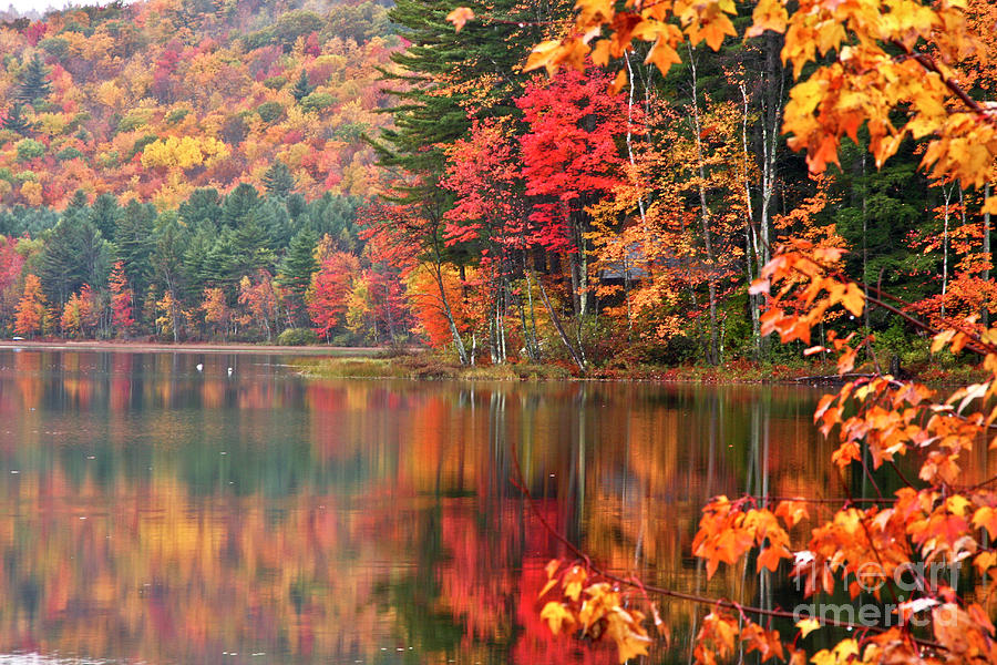 Stocker Pond New Hampshire II by Butch Lombardi